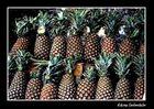 Conjunción frutal