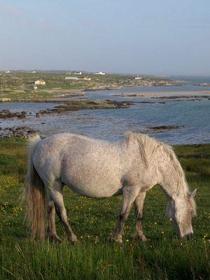 Connemara - Land der Pferde 2
