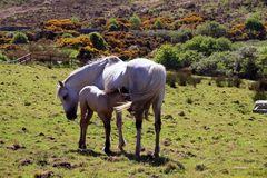 Connemara National Park Tierwelt 1