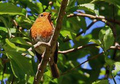 Connemara National Park Tierwelt
