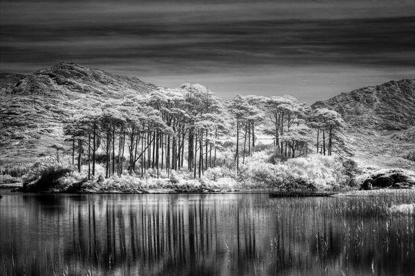 Connemara Woods