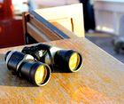 Contempler les phoques en Baie de Somme