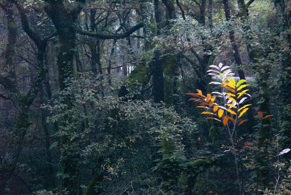 Contraste en el bosque