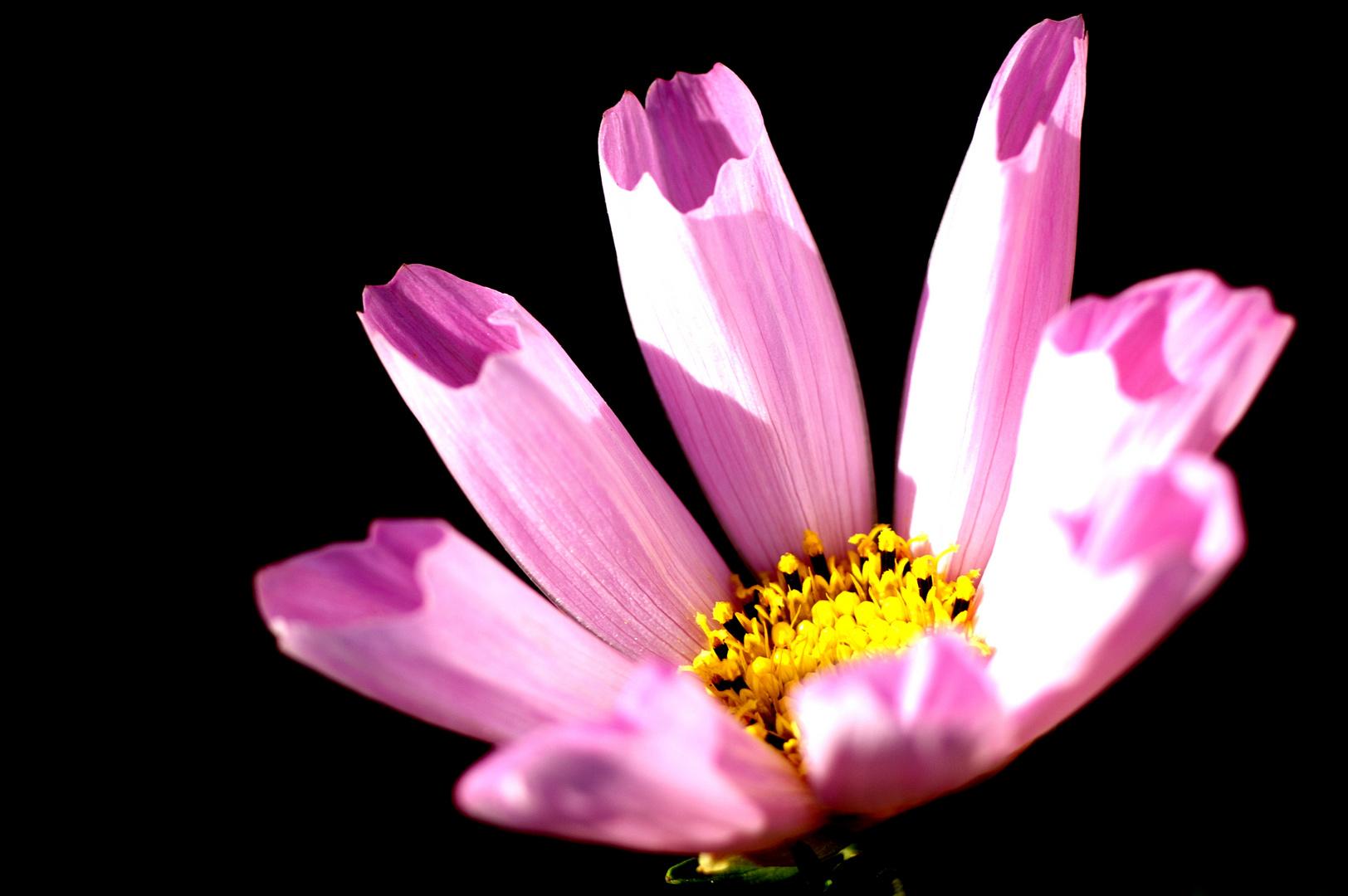 contraste fleur