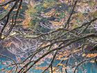 """""""Contrasti d'autunno"""" di Elena Ruchin"""