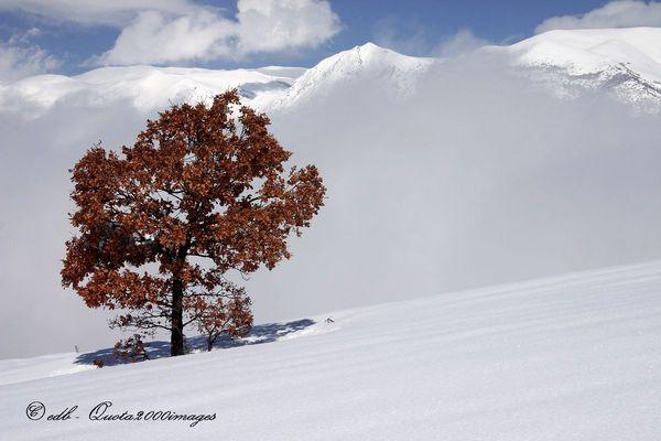 Contrasti invernali