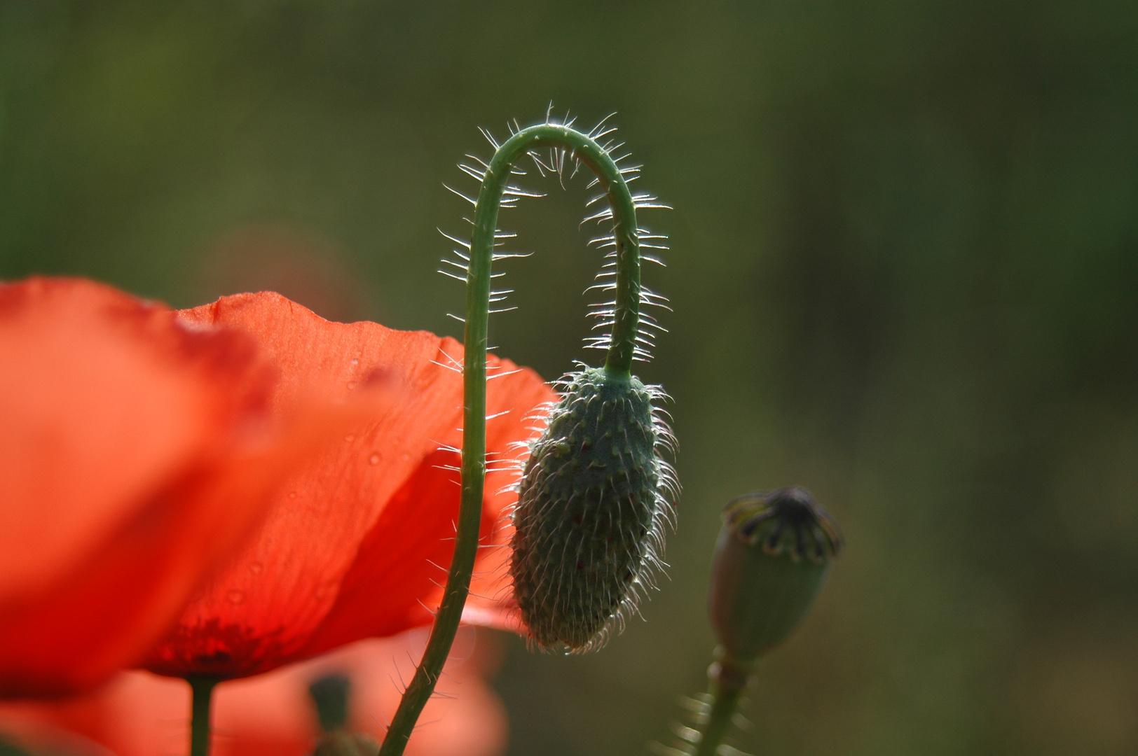 contre jour floral