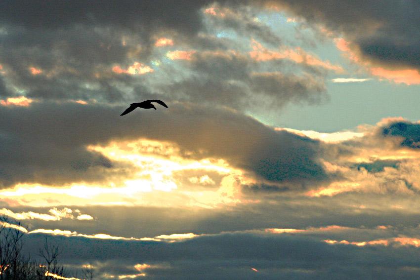 Contre vent et nuage