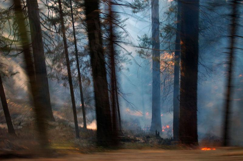 Controlled burn: Yosemite National Park