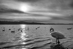 Controluce, lago di Varese