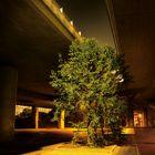 convicted urban tree
