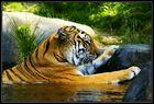 cool bath