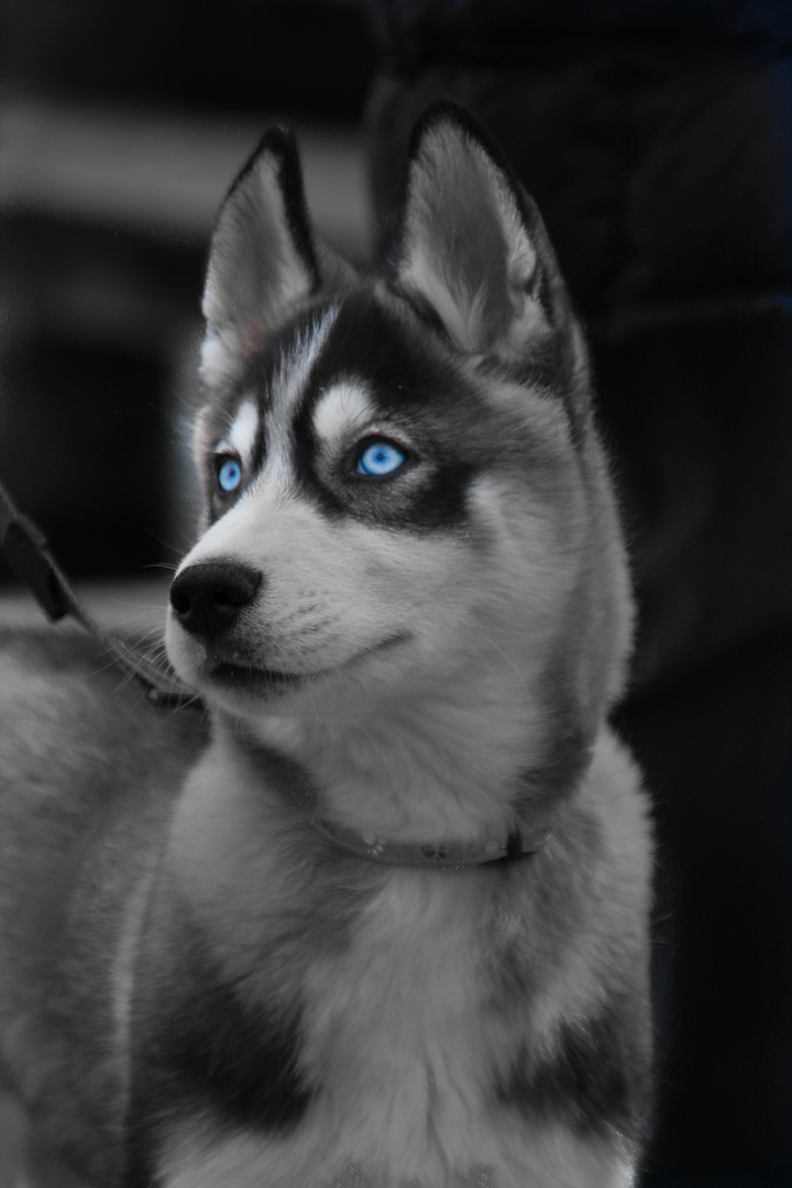 Cool Blue Eyes