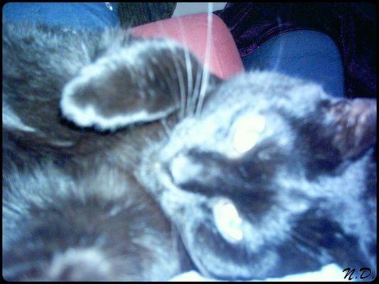 *Cool Cat* - *Hypnotic Cat*