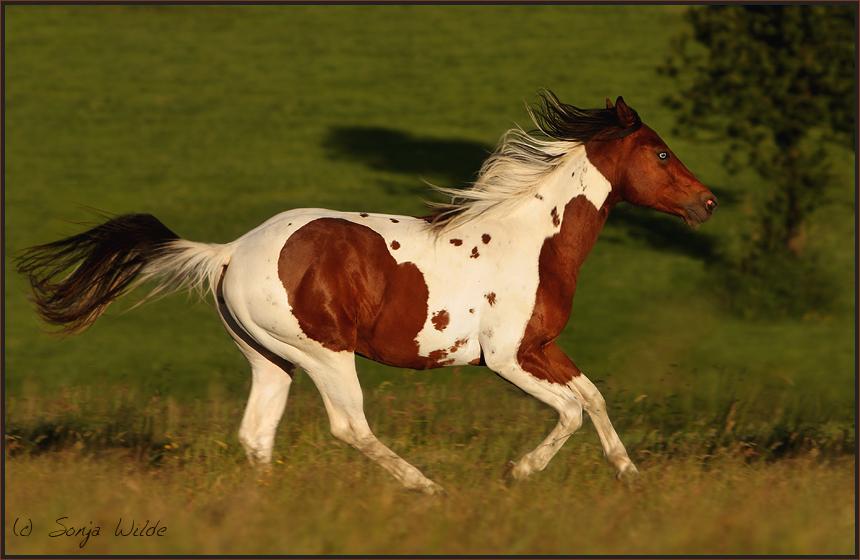 cool texas cowboy foto bild tiere haustiere pferde. Black Bedroom Furniture Sets. Home Design Ideas