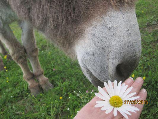 cool un bonbon! ah non une fleur...