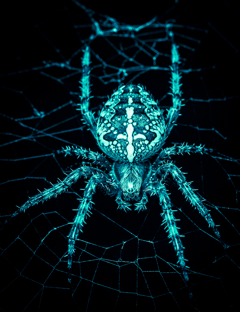 Coole Spinne