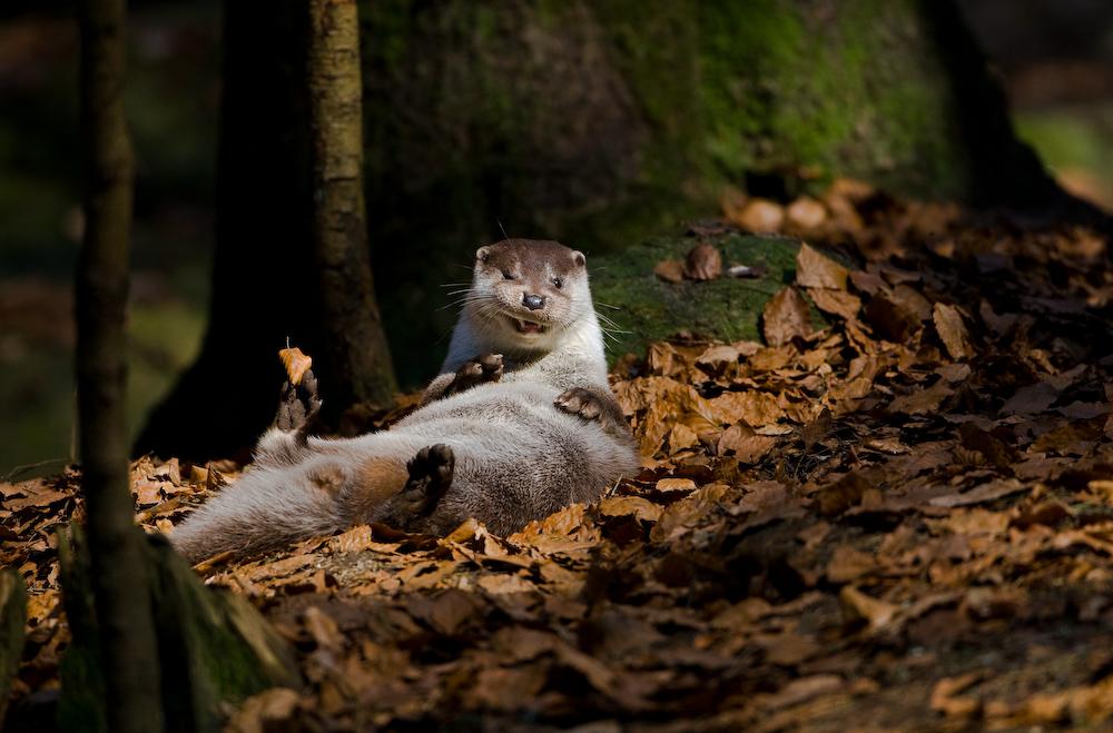 Cooler Otter ;-)