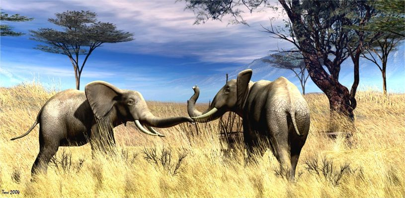 coppia di elefanti