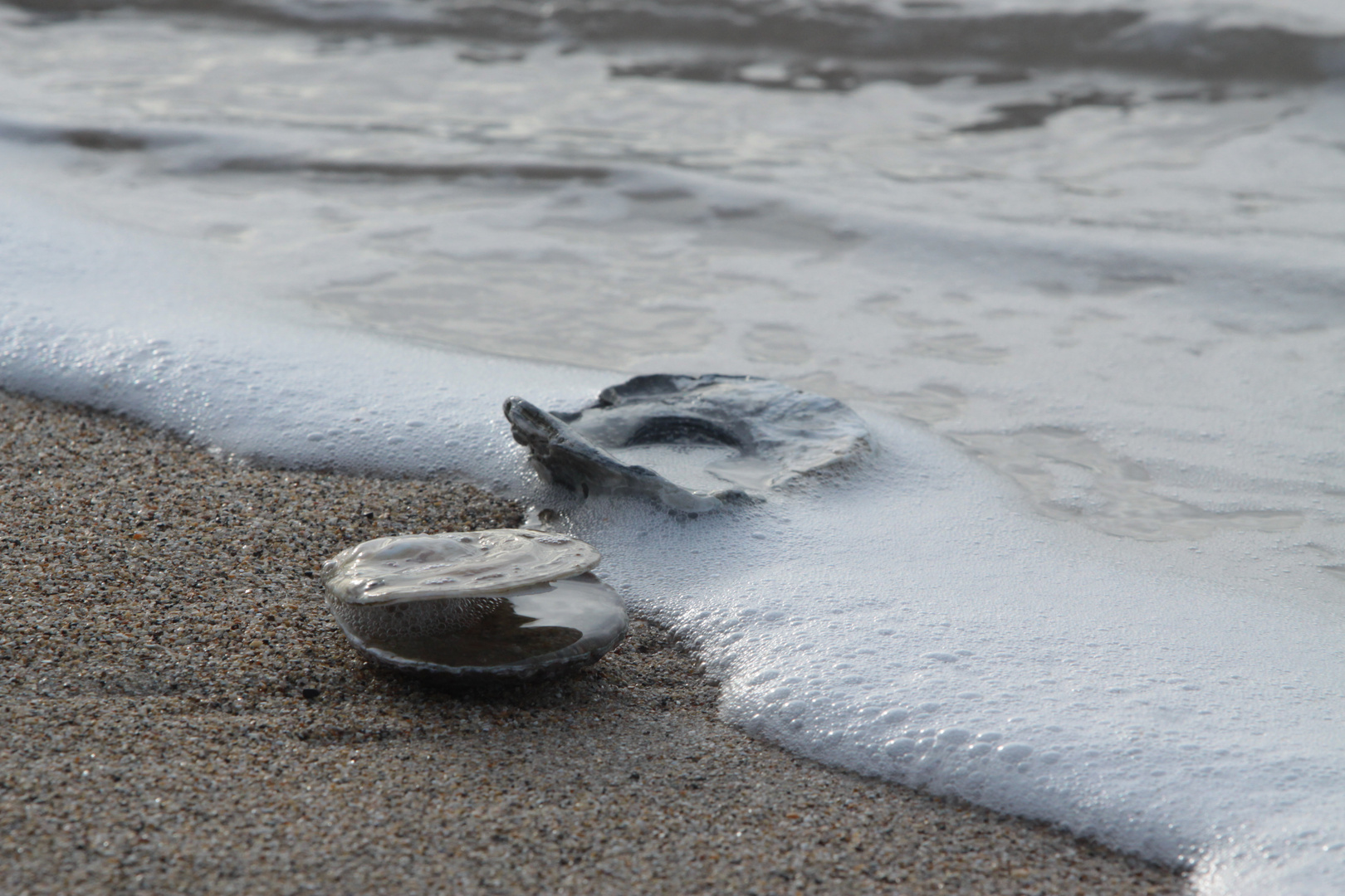 Coquillage et nouvelle vague