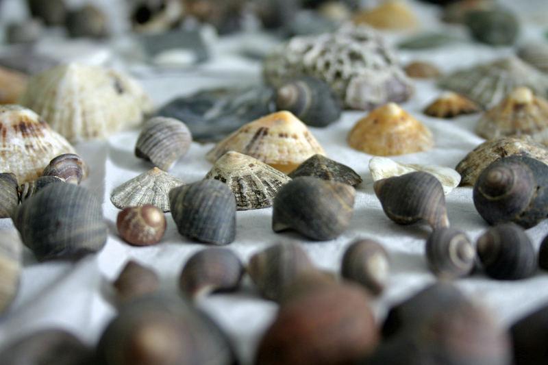 coquillages allignés