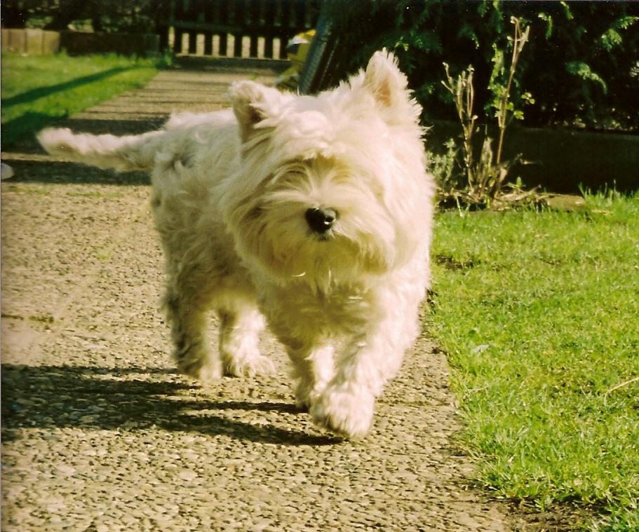 Cora auf dem Laufsteg! :-)