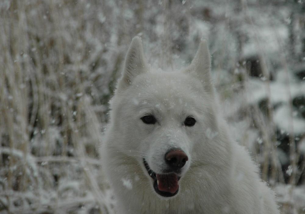 Cora beim ersten Schnee