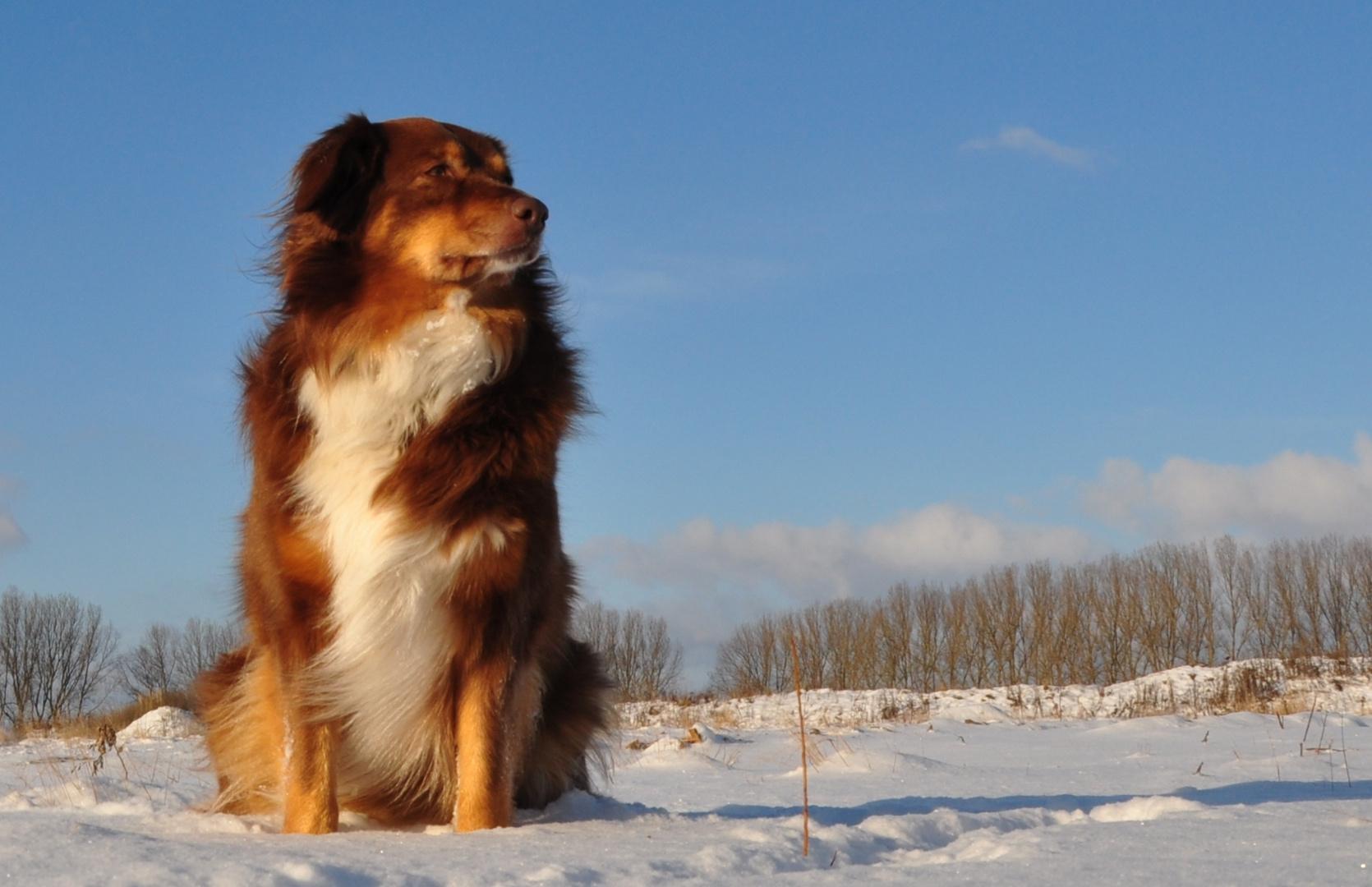 Cora im Schnee