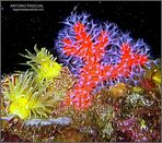 Coral Rojo, el Oro del Mar