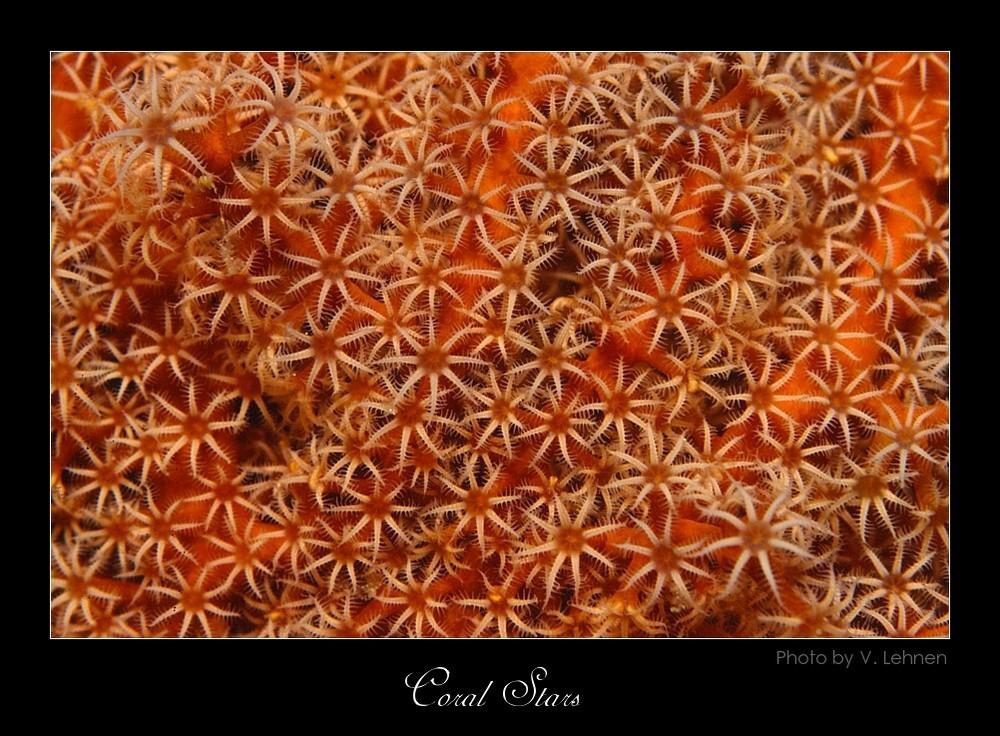 """Coral stars"""