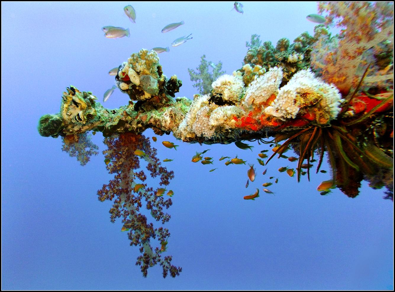 Coral zen garden