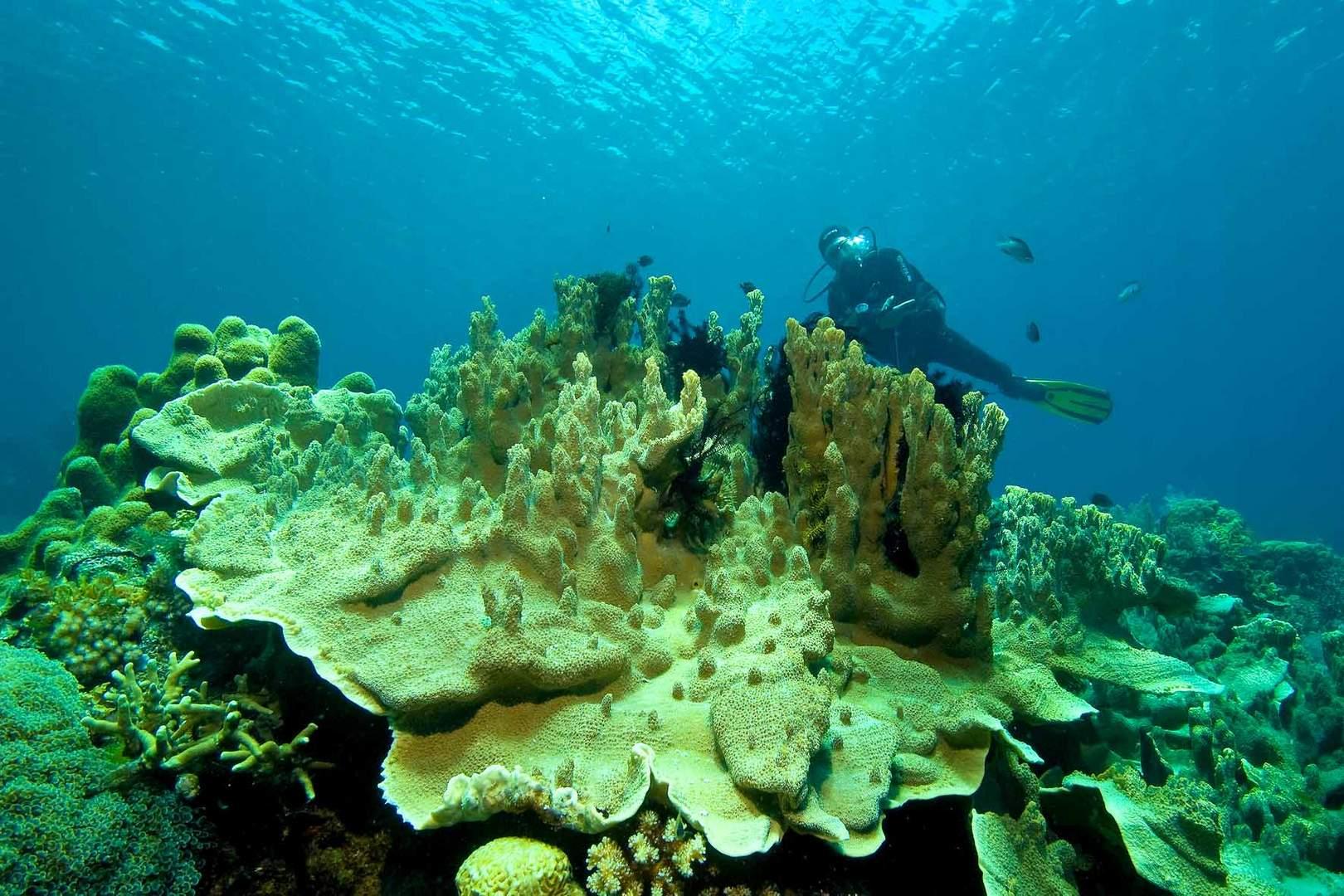 Corallgarden