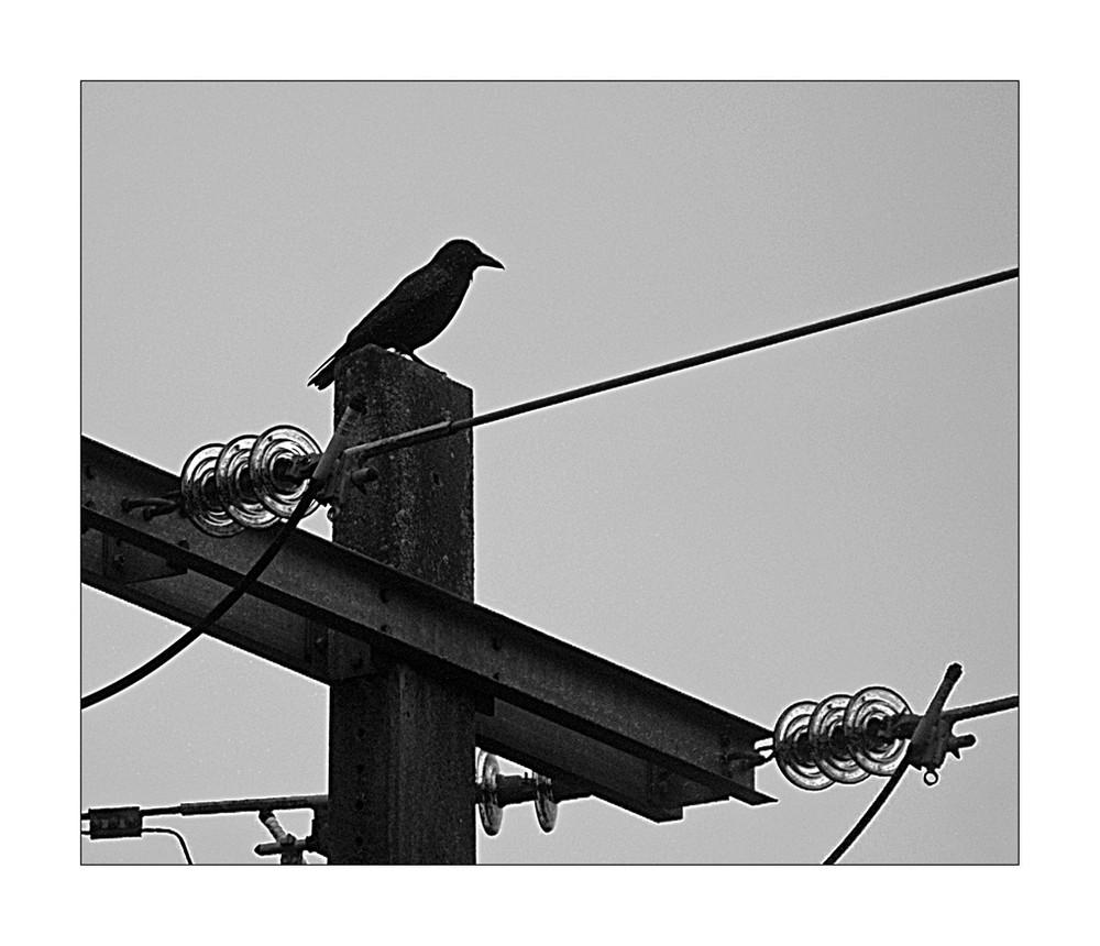 corbeau ne tenant qu'à un fil
