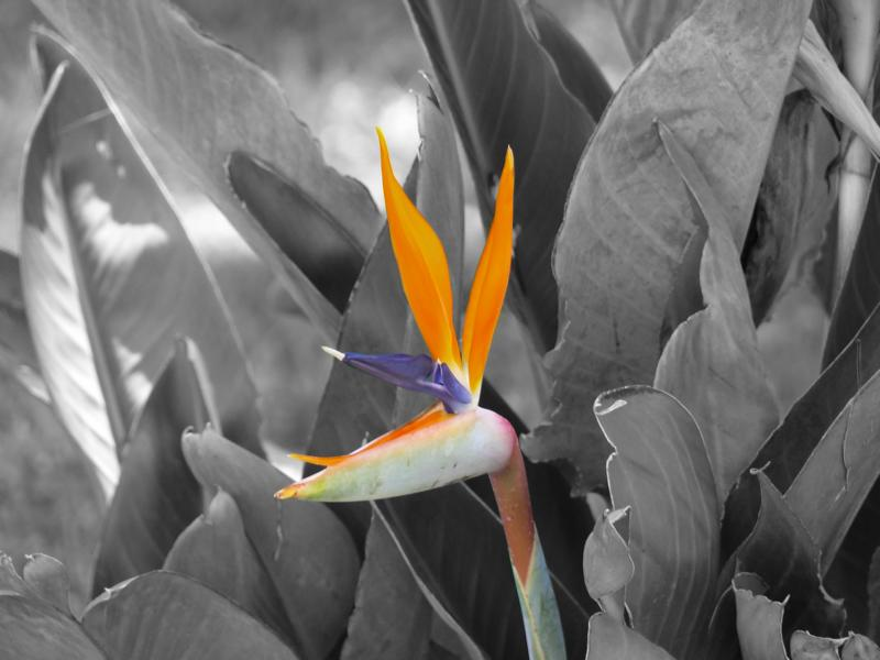 Corfu flower