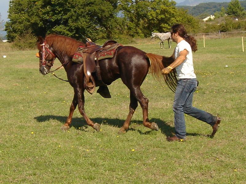 CORFU-HORSES-3