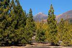 Corona Forest und Teide