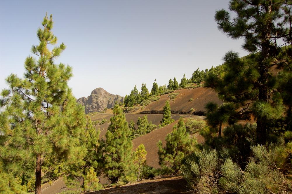 Corona Forestal