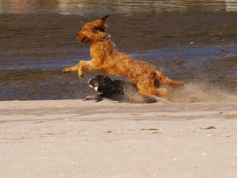Corre que te atrapo!!!