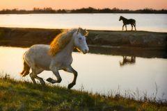 Corri cavallino!