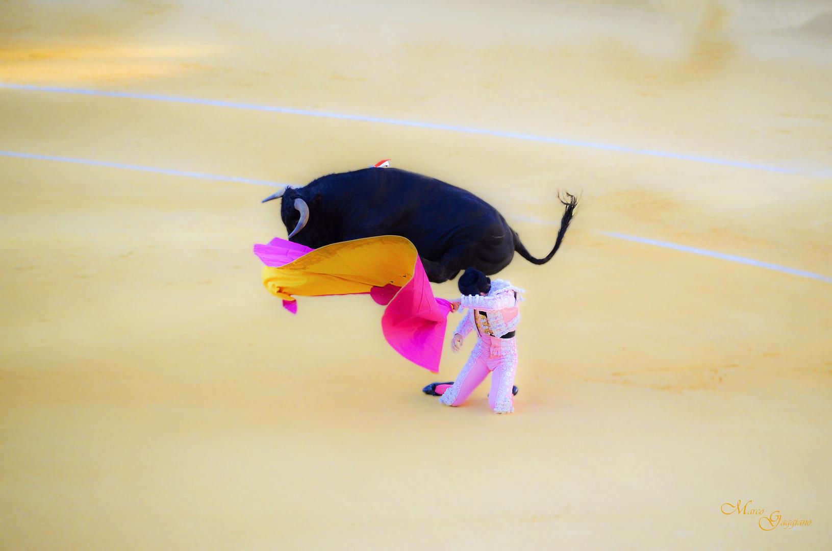 corrida de toros novillada