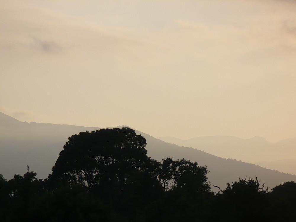 Corsica Sorbo