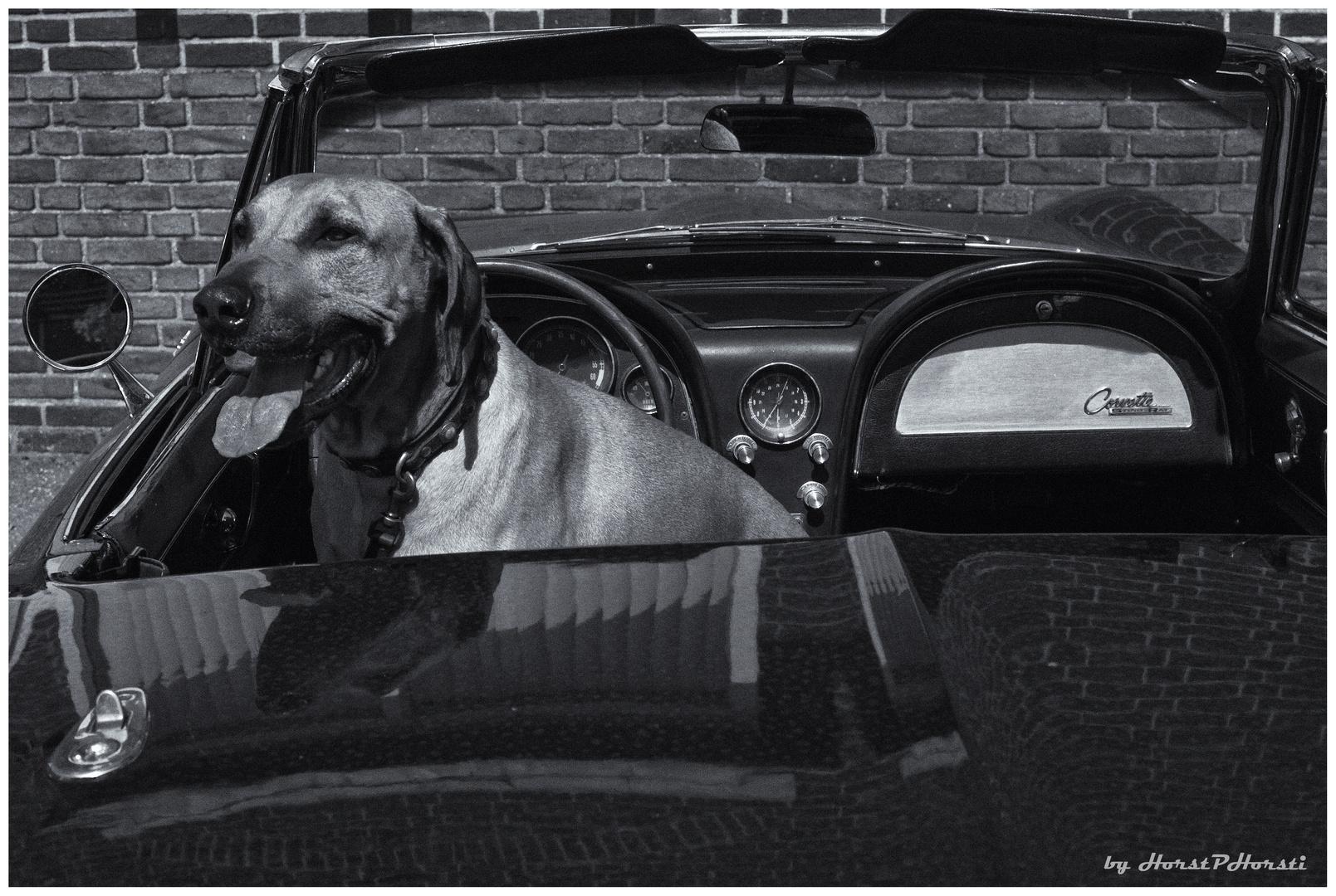 >Corvette...und wie geht rückwärts fahren?