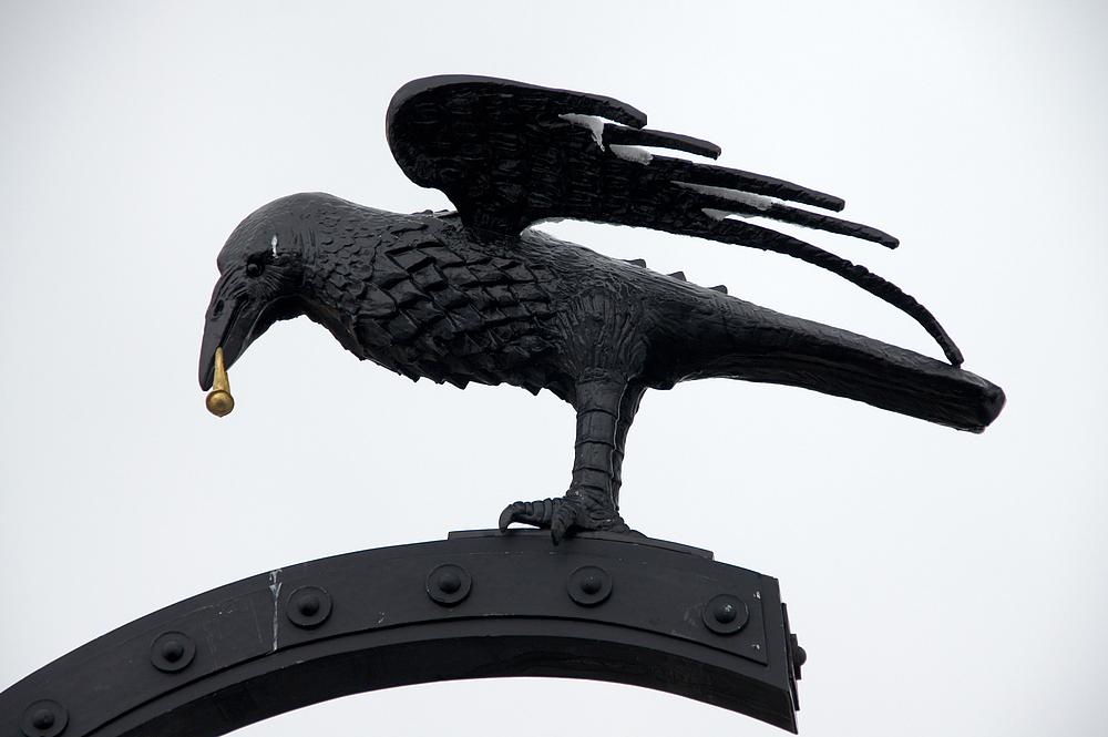 ..Corvus, der Rabe..
