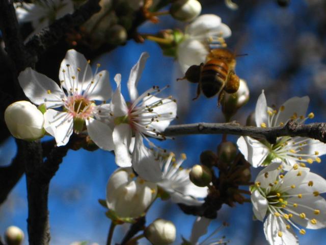 cosecha...primaveral..