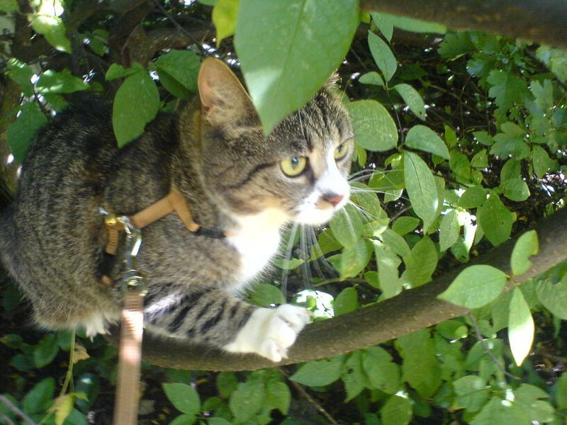 Cosima in Freier Wildbahn