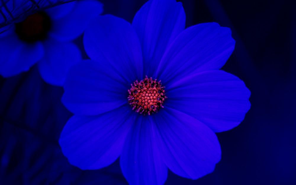 cosmos bleu