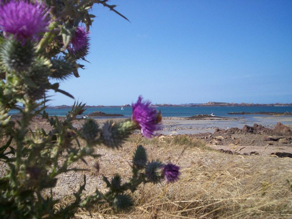 Costa bretone