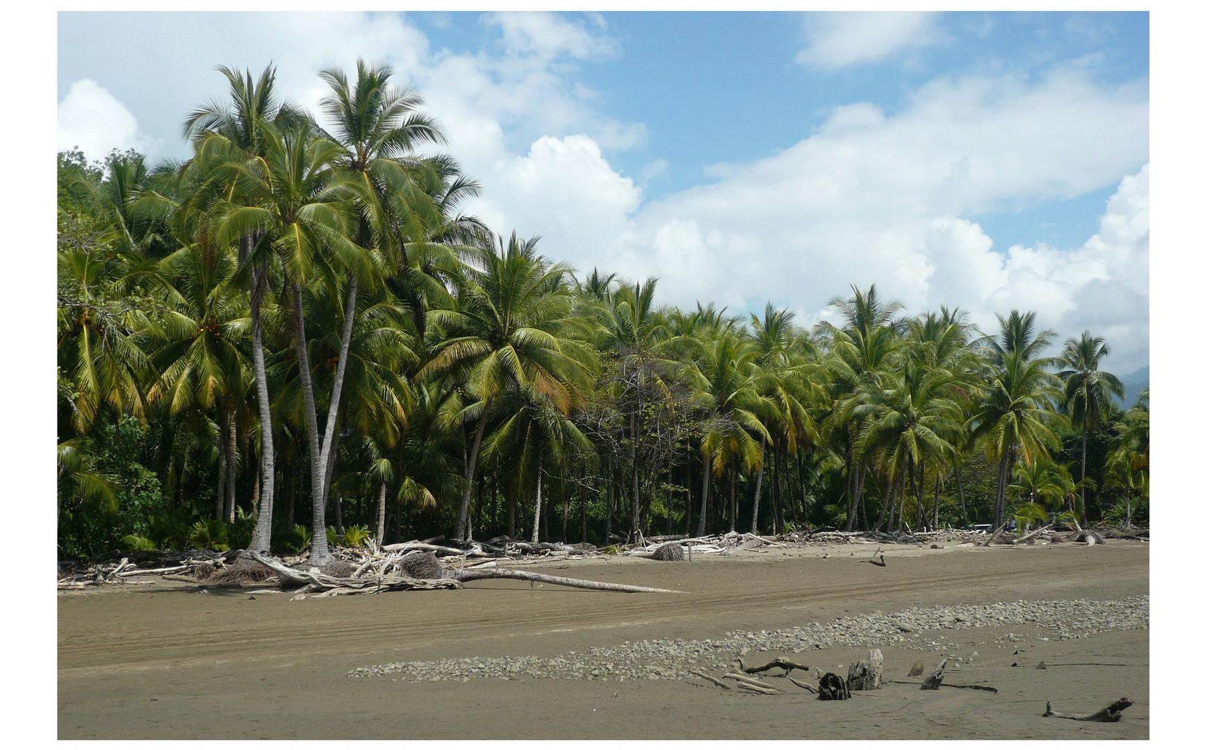 Costa Rica - im Januar 2012 unterwegs im Öko-Musterland