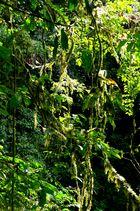 Costa Rica - Regenwald bei Puerto Limon