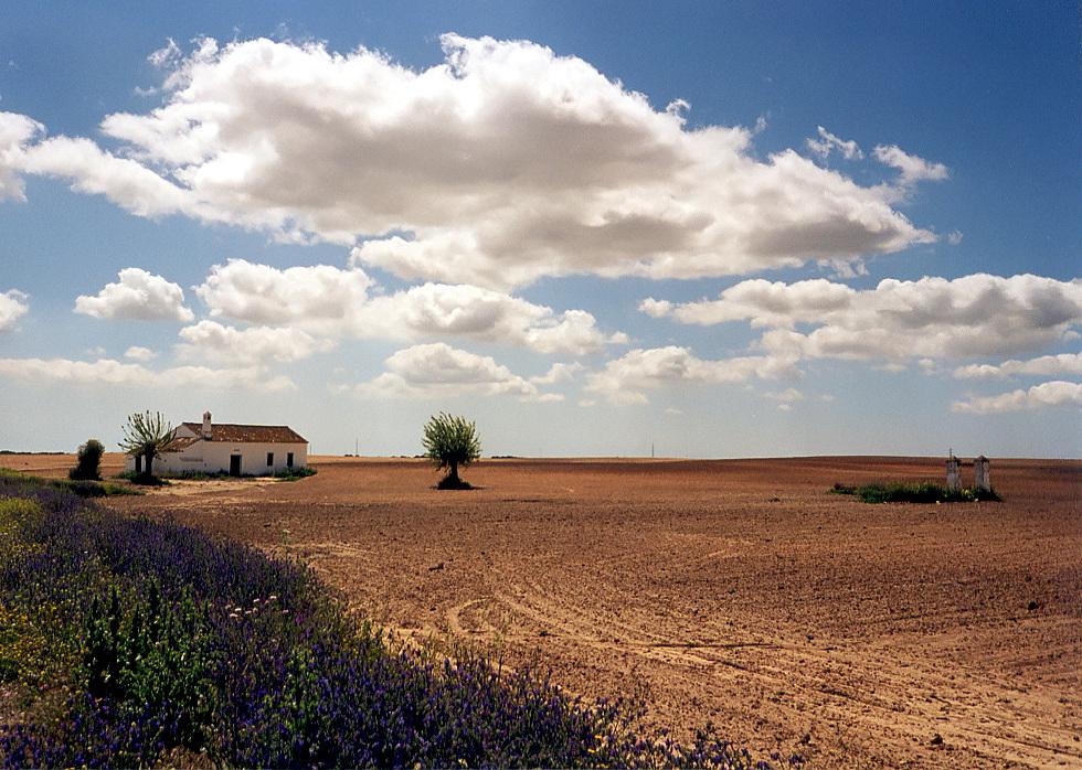 Coto de Doñana (Reload)